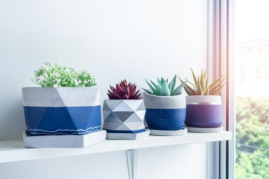 white shelf with designer potted succulents